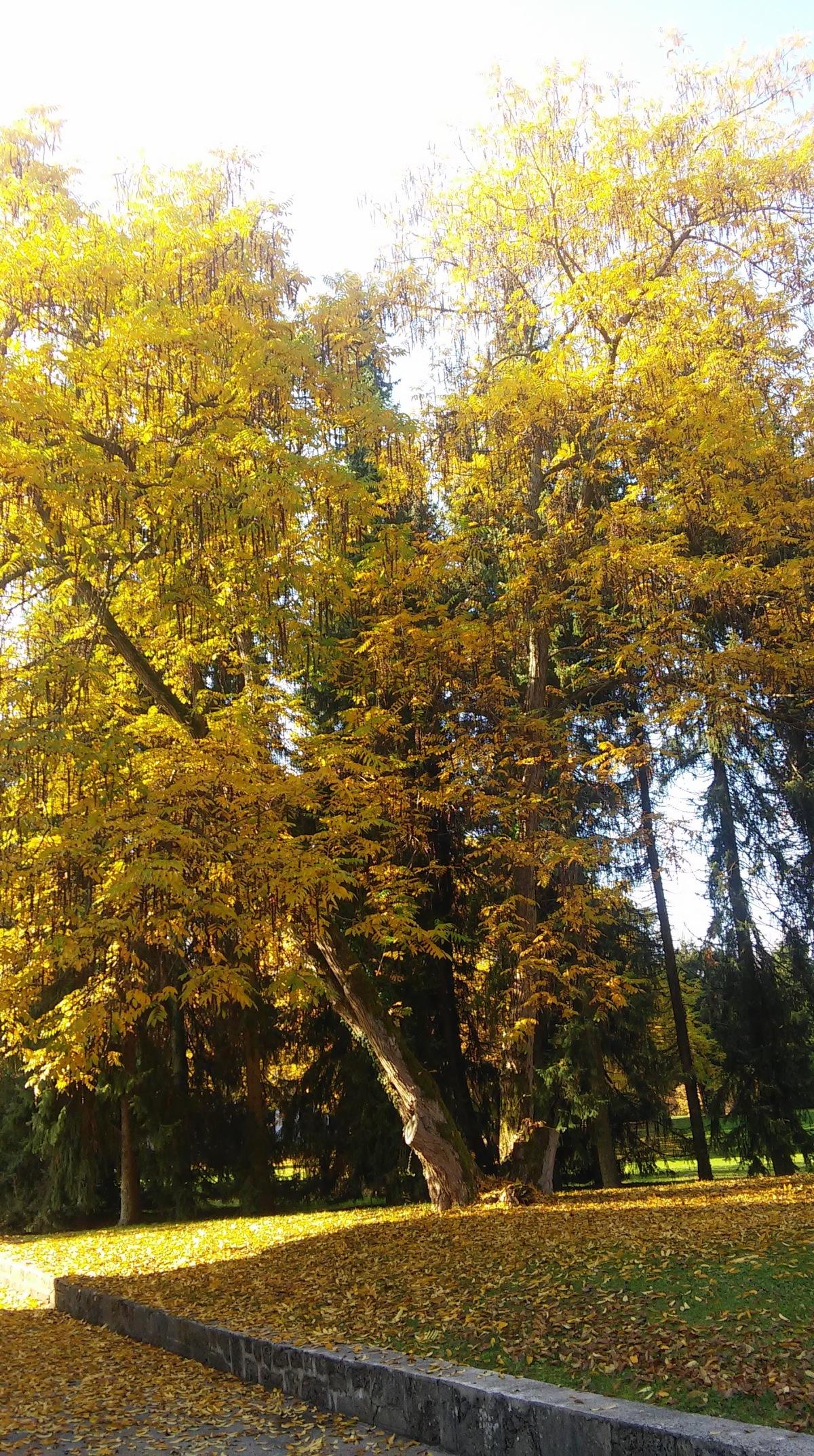 Čarobna jesen v parku Brdo2015