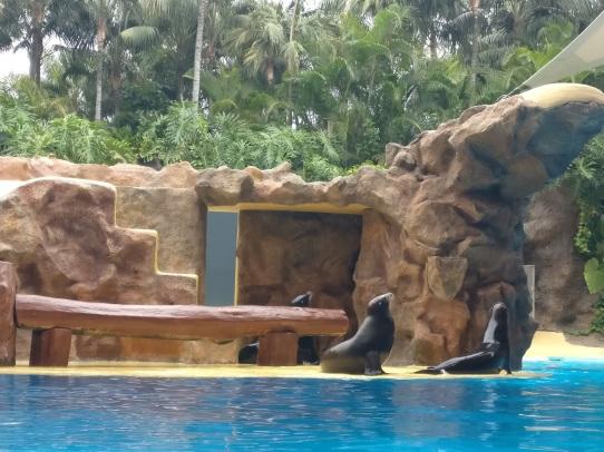 Tenerife_loro parque_1