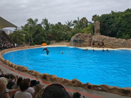 Tenerife_loro parque_2