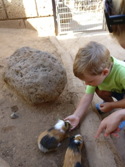 Tenerife_Monkey Park_2