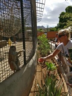 Tenerife_Monkey Park_3